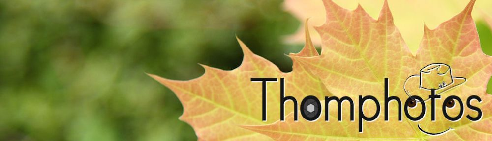 Blog de Thomphotos