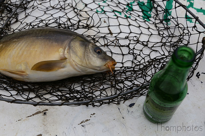 nature animal poisson fish pêche étang fishing rod canne à pêche carpe filet épuisette bière beer