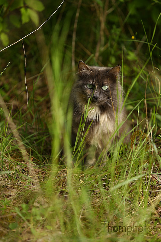 nature animal chat cat sauvage genève la plaine herbes grass