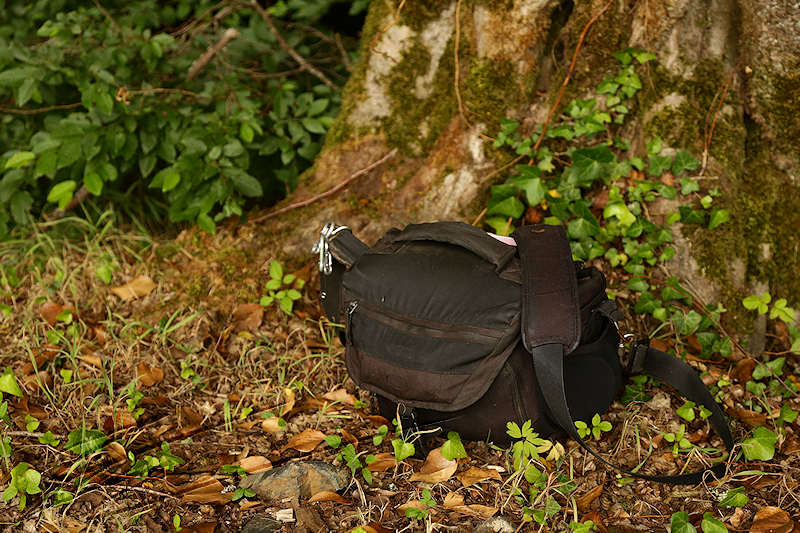 Lowepro review test photo porn porno camera bag sac sacoche appareil photo Lowepro nova 180 AW noir black forêt forest arbre tree