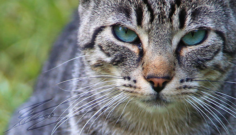 chat minou pays basque reportage